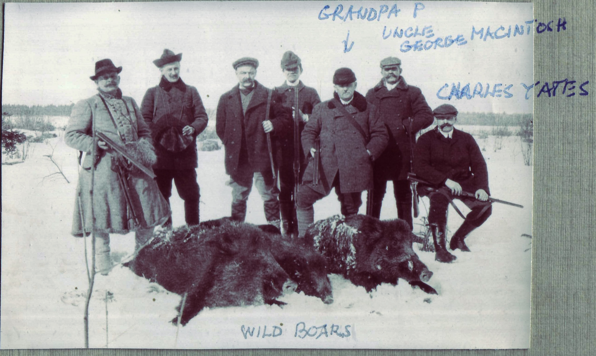 Hunting Wild Boars in Poland